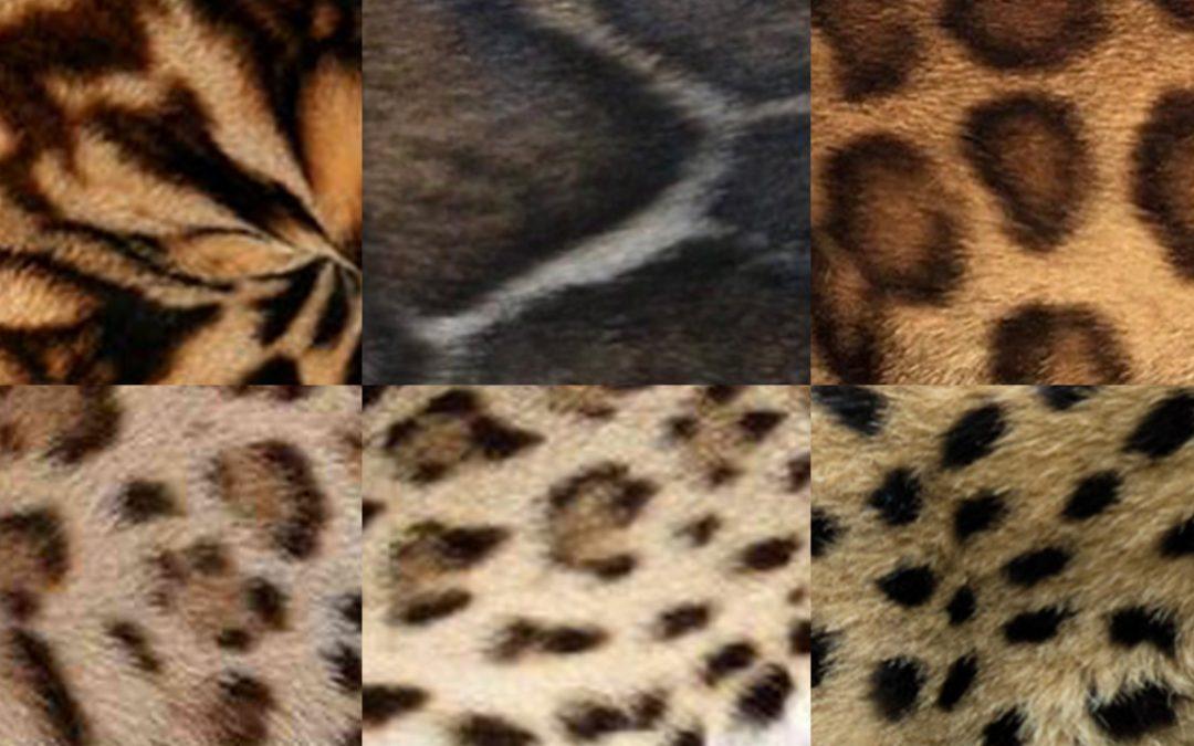 Bengal patterns