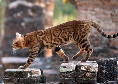 Bangkokcats Soju