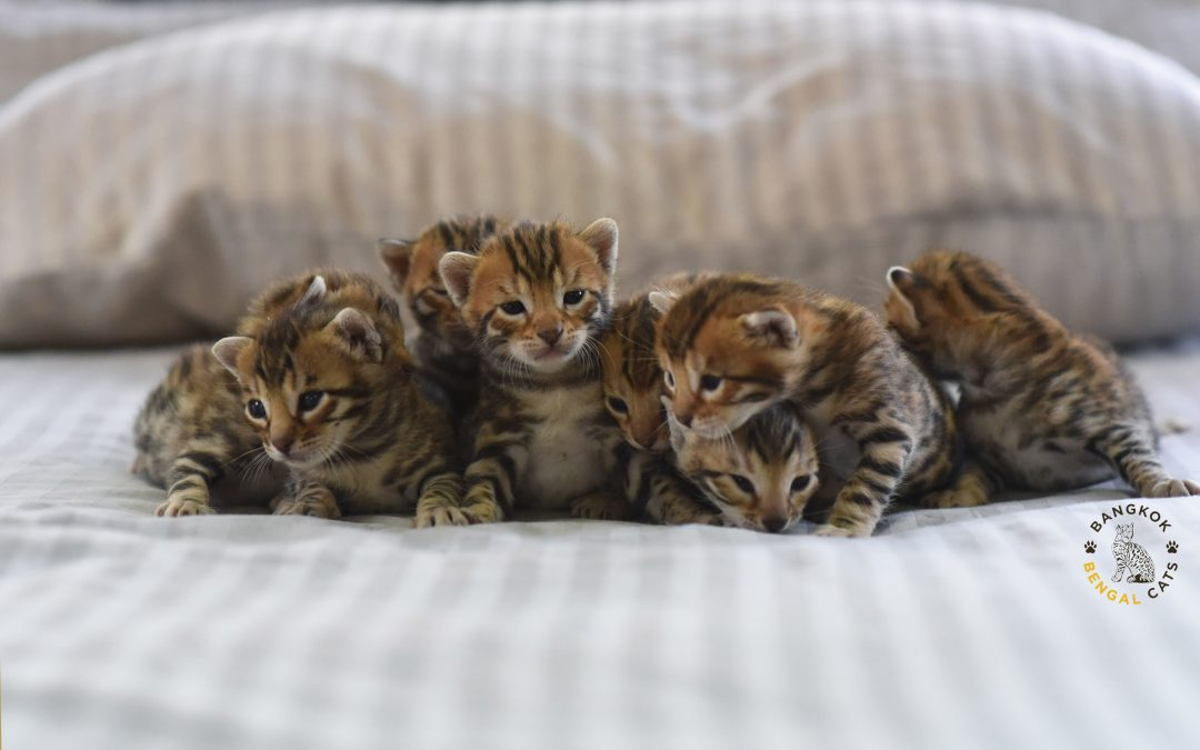 The biggest litter we have ever had!