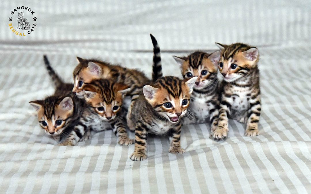 Welcome to the world: Papyrus kittens are born!