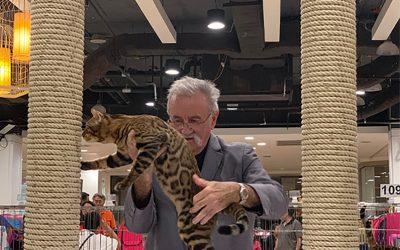 4th Bangkok Cat Party, CFA International Cat Show