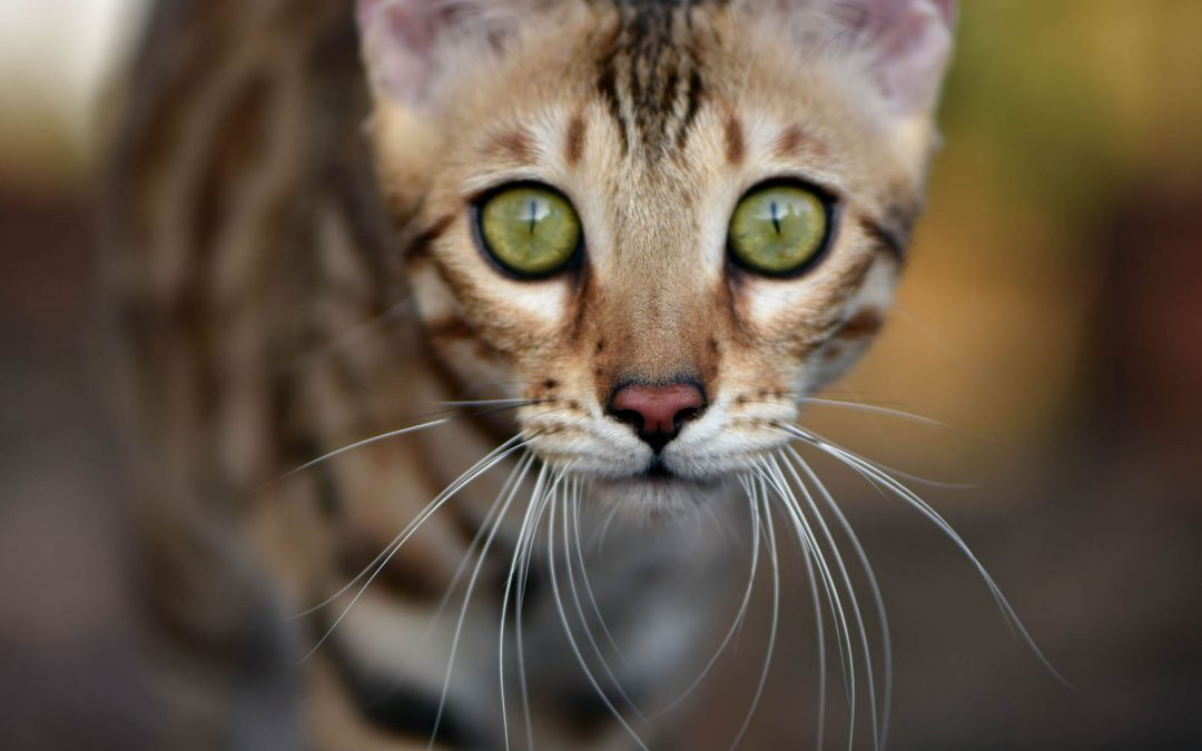 Bangkokcats Farrah Moan